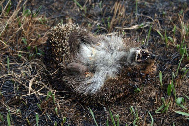 Опасные «мифы» о весенних палах