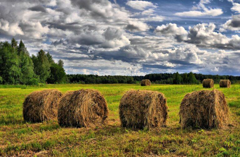 На территории района началась зеленая жатва